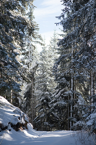 winter landscape in forest at sunset with fresh snow and clear blue sky