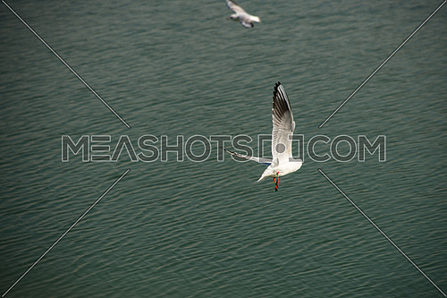 seagulls flying by a lake