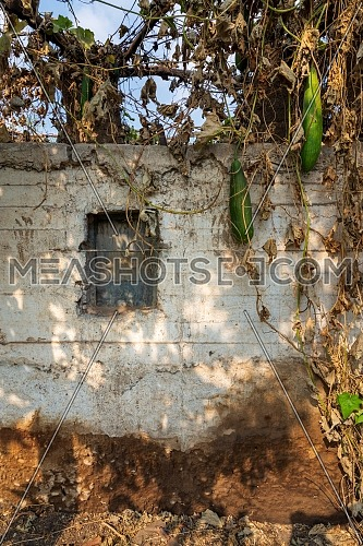 Abandoned exotic white stones bricks wall with single rusted iron window surrounded by tropical withered plants on roof