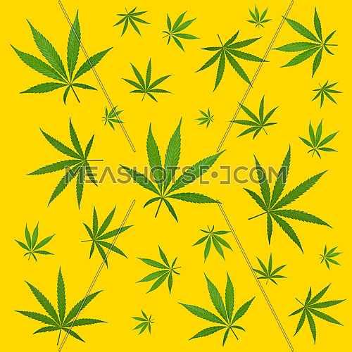 Pattern of green hemp cannabis plant leaves over yellow background