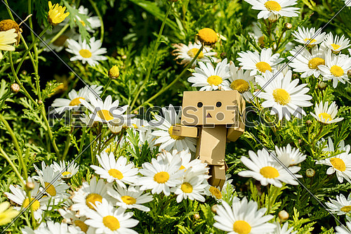 a paper doll in the middle of Oxeye Daisy flowers