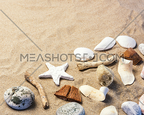 Composition of Seashells on sand with copy space.