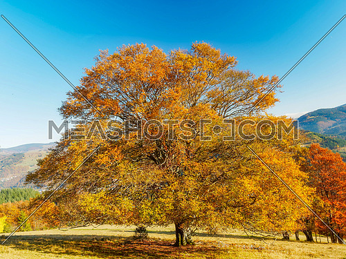 Park autumn landscape with autumn trees and fallen autumn leaves.