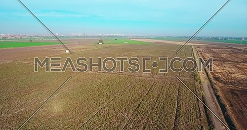 Aerial shot for Cotton Fields in Kafr elsheikh  at day