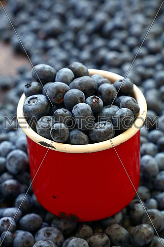Fresh ripe blueberry berries heap in old vintage red enamel metal mug at retail farmers market stall, close up, high angle view