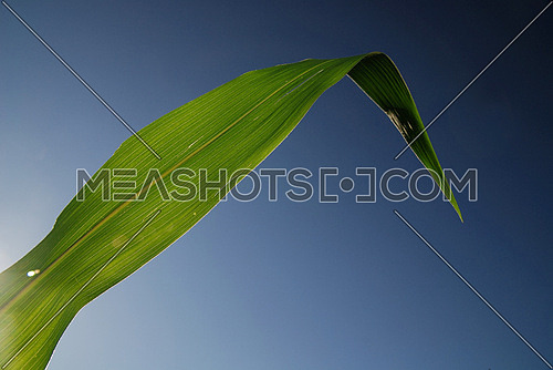 green leaf with blue sky in background                  (NIKON D80; 6.7.2007; 1/60 at f/8; ISO 100; white balance: Auto; focal length: 18 mm)