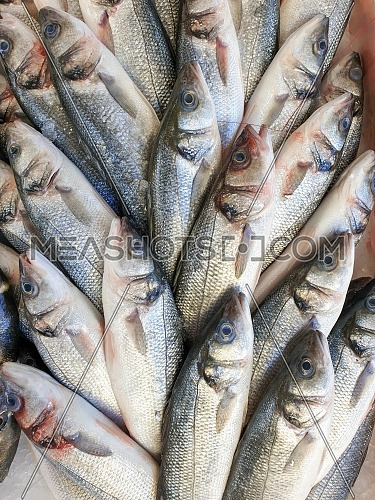 Many sea bass fish on ice for sale, Fish local market stall with fresh seafood,view from top.