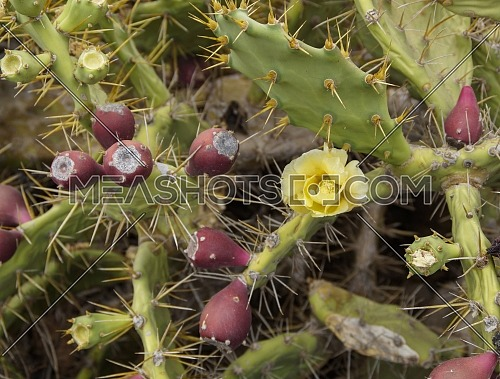 Fresh succulent cactus closeup on blue sky. Green plant cactus with spines
