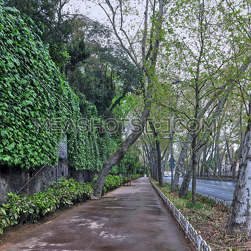 Pedestrian walkway between raw of trees and climber plants at Dolmabahce Street, Besiktas, istanbul, Turkey