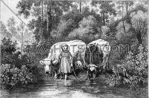 Painting Exhibition of 1857, Cows at the watering hole, vintage engraved illustration. Magasin Pittoresque 1857.