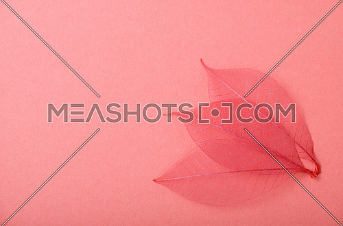 Three red dried skeleton leaves decoration overlap in corner on pink paper background