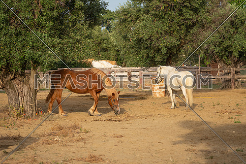 Nice two horses In a corral at the ranch