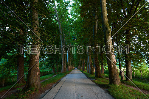 road with trees on fresh summer morning in beautiful  alley