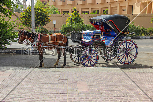 a photo for a horse carriage known as hantour in Egypt streets used in transportation for tourists and others