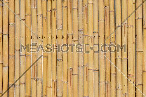 Background of yellow natural bamboo vertical trunk bodies with gaps between