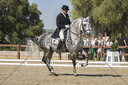 Spanish purebred horse competing in dressage competition classic, Montenmedio, Cadiz province, Andalusia, Spain