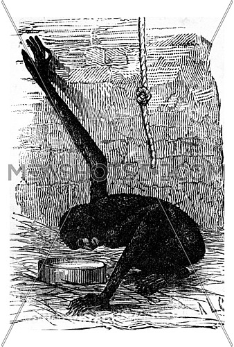 The first mirror, vintage engraved illustration. Earth before man – 1886.