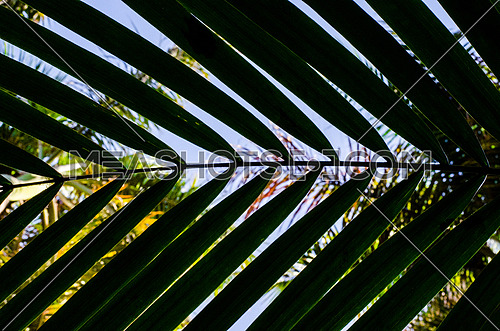 close up on big tropical jungle leafs , palm tree filling the frame