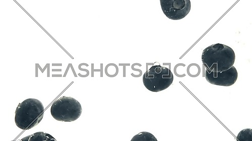 Close up several fresh blue ripe blueberries thrown and floating in clear transparent water, low angle side view, slow motion
