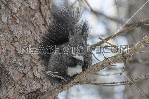 The squirrel sitting in the branch of a tree in the park