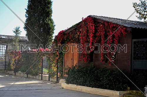 A wooden Cabin surrounded and full of plants covering it in different colors of leafs in red and green