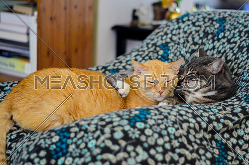 Cats relaxing on a blanket on a chair