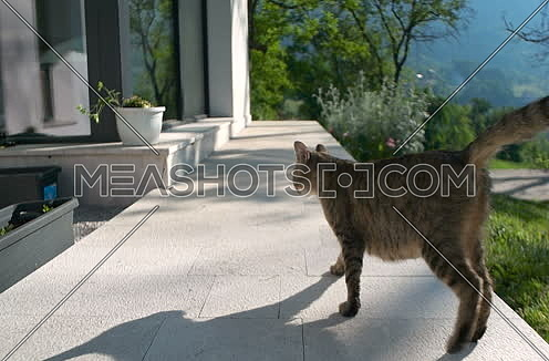 cat walking in front of beautiful home