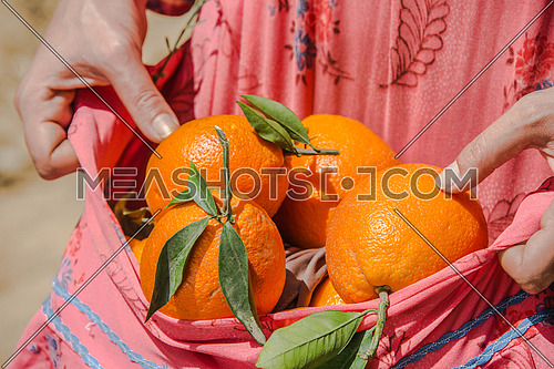 a close up of female farmer hands carying oranges in her traditional dress