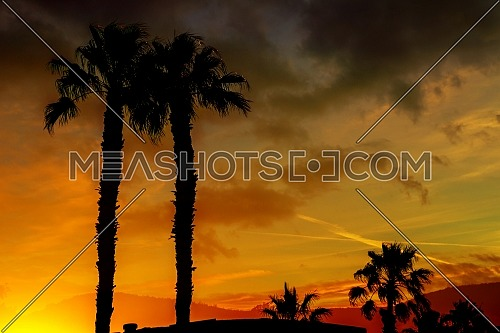A beautiful sunset with orange and yellow colors in the sky the silhouette ountains and palm trees in the Arizona.