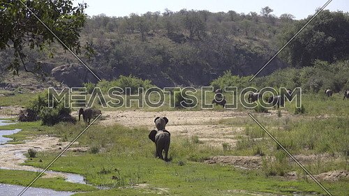 View of a river bank with elephants grazing nearby