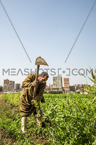 Farmer using his axe in the farm