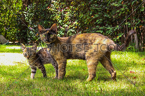a closeup for a kitten and a cat in a garden  representing motherhood