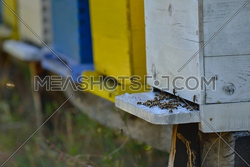 honey bee worker  farm animal  home in nature representing health medicine and organic food concept