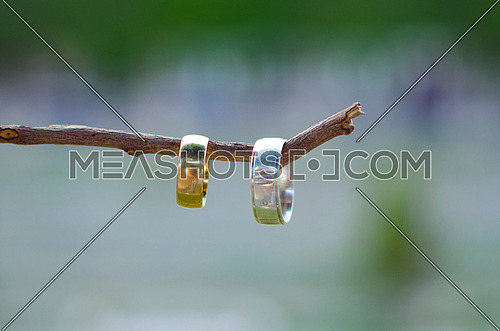 two wedding rings on a tree branch