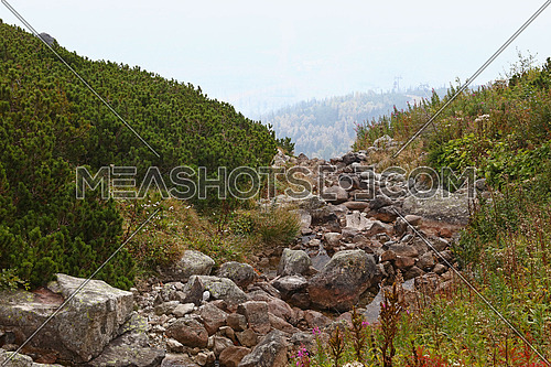 Summer day mountain landscape with rocky brook stream and green pine trees