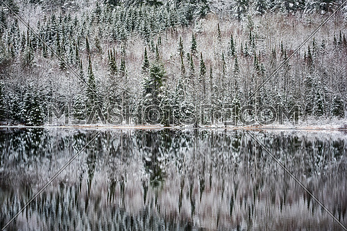 Still waters reflect winter forests.  Light snow under subdued overcast grey November sky.  Reflections of waterfront forest mirrored on the lake.
