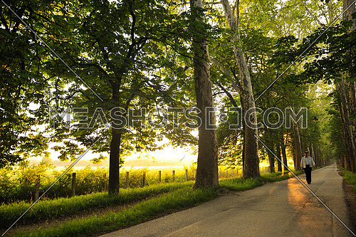 senior man walk in nature at sunrise in beautiful alley at nature