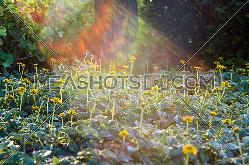 sun rays covering a garden full of yellow flowers