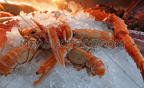 Fresh catch of red langoustines (Nephrops norvegicus, Norway lobster, Dublin Bay prawn or scampi) on ice close up, retail market display, low angle view