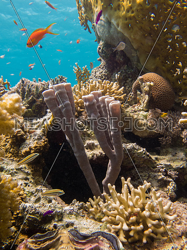 Tropical coral reef with fish