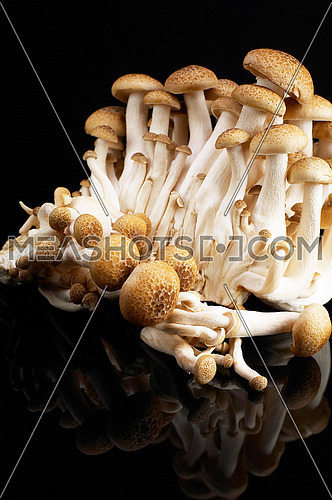 bunch of fresh mushrooms over black reflective surface  background