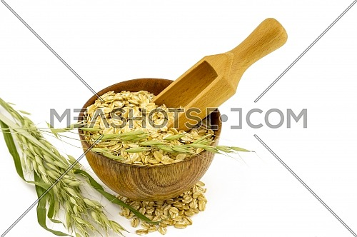 Oat flakes in the bowl, wooden scoop and oat branch isolated on white background with copy space