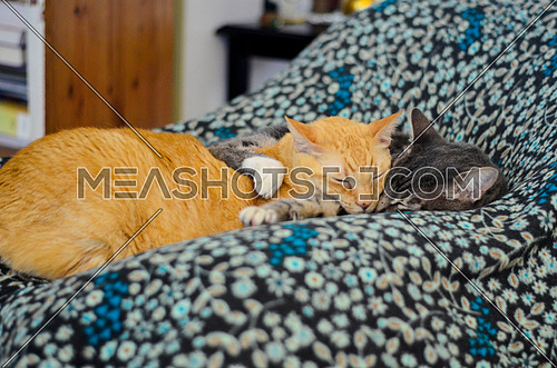Two cats lying down in a sweet afternoon on a chair and a flowery blanket