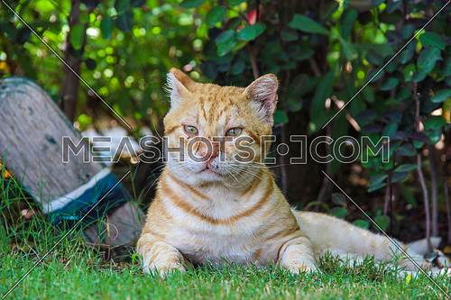a cat with scratch marks on face in a garden outdoor