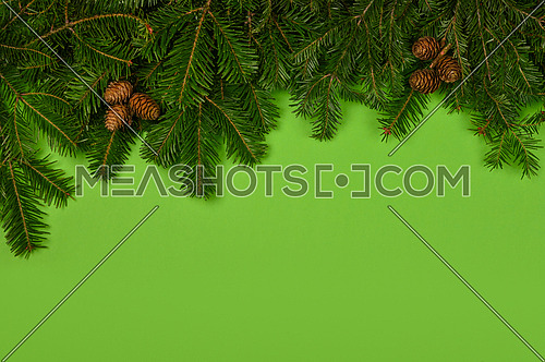 Close up fresh spruce or pine Christmas tree branches with cones over green background with copy space