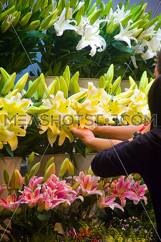 colorfull fresh lily flowers at the flowers market