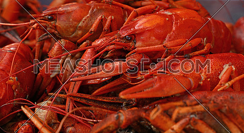 Portion of cooked ready to eat red crawfish (crayfish) close up, low angle side view