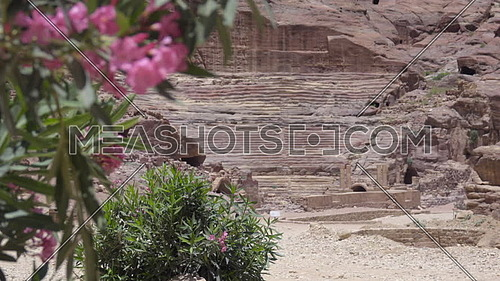 Left pan of desert flowers blooming near amphitheater carved into rock of Petra