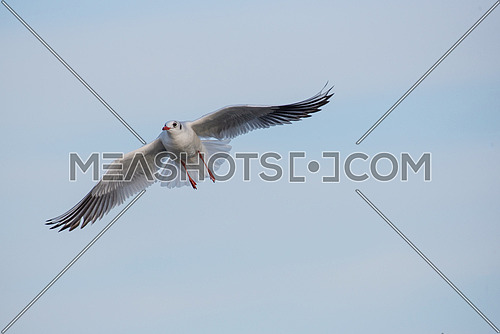 Flying seagull on a background of blue sky