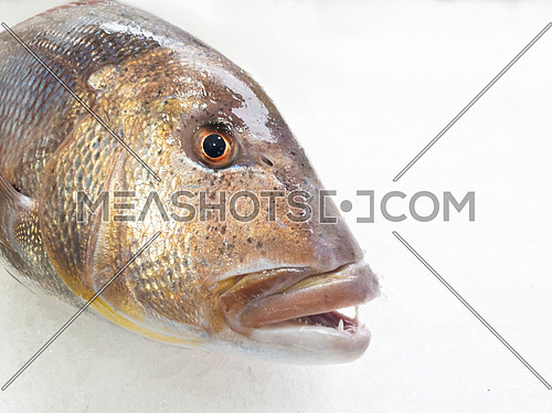 A big dentex in a fish market on ice,close up details. Common dentex (Dentex dentex).